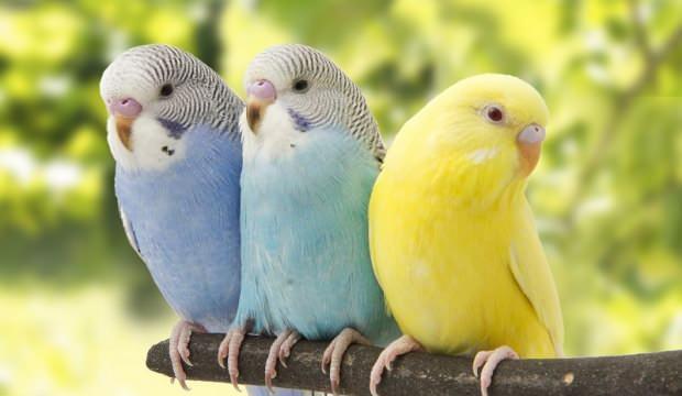 Muhabbet Kuşu Fiyatları Pet Shop 2021, Güncel Fiyatlar 2021 | Fiyat Dedektifi - Güncel Canlı Zamlı Fiyatlar 2021