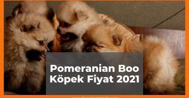 Pomeranian Boo Köpek Fiyat
