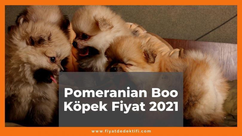 Pomeranian Boo Köpek Fiyat 2021, Güncel Fiyatlar 2021   Fiyat Dedektifi - Güncel Canlı Zamlı Fiyatlar 2021