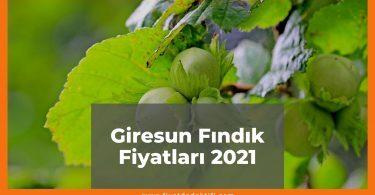 Giresun Fındık Fiyatları 2021, Güncel Fiyatlar 2021 | Fiyat Dedektifi - Güncel Canlı Zamlı Fiyatlar 2021